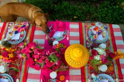 Dog sniffing fancy table, behind the scenes of a photo shoot.