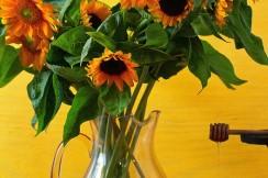 Honey and sunflowers, palm beach county